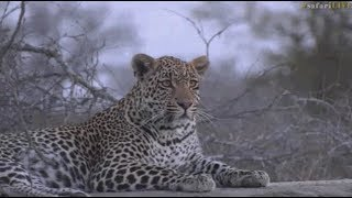 Pt 2 Safari Live's Sunset Safari Drive at 5:00 PM on Sept 13, 2017 ( Hosana & Thamba ) thumbnail