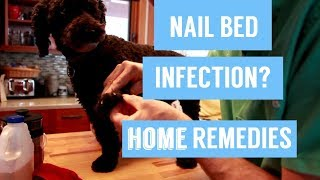 Dog Nail Infection: 7 Holistic Remedies