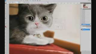 Ускоренное рисование кошки / Speed Painting Adobe Photoshop