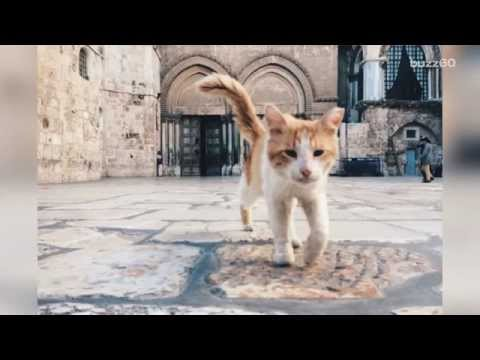Israel minister criticized for proposal to deport Jerusalem's cats