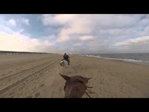 [GoPro] Gallop on the Beach