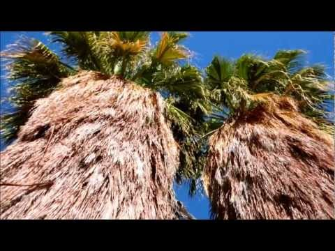 Desert Fan Palm, Washingtonia filifera, Palm Desert, California