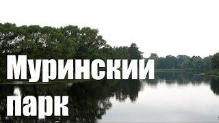 Муринский парк (Тест Olympus PEN E-PL9 на Zhiyun Crane M)