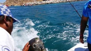 Feeding and petting sea lions in Cabo San Lucas