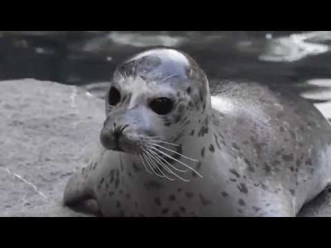 Harbor Seals arrive at Oregon Zoo