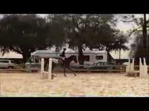 Real Cool 2005 ApHC at PCHA Tampa Show