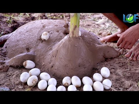 Strange Cooking Food Using Mud Oven Turtle | Wired Roasted Balut Eggs | Life of Natural Foods