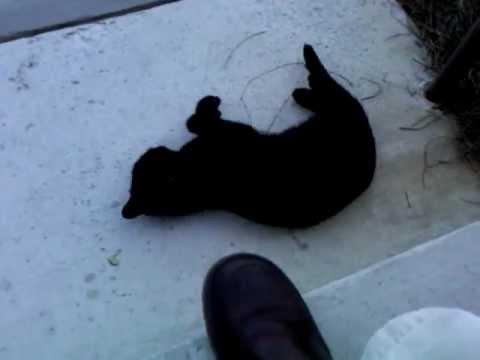 Bear when he was homeless.