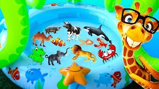 Learn Wild Animals with Toy Animals for Kids and Learn Sea Animals and Farm Animals in Water Tub