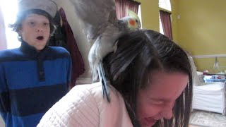 Attacked By A Bird On Thanksgiving! (wk 204.3) | Bratayley
