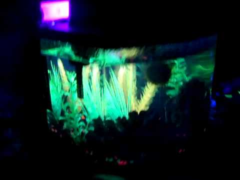 My black light fish tank youtube for Black light for fish tank
