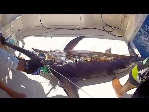 Deep Ocean Swordfish