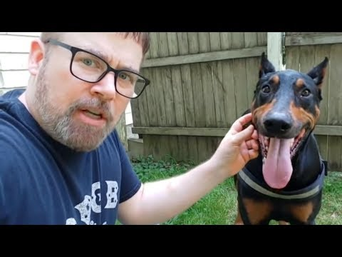easy-dog-training-tips:-how-to-stop-a-dog's-barking