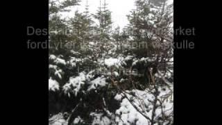 Vintersang/ wintersong Sara bareilles