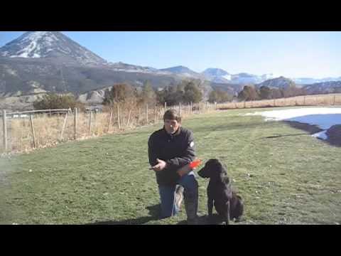 Teaching a Labrador to Retrieve