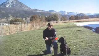 Teaching A Labrador To Retrieve