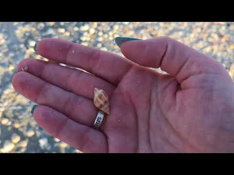 Sanibel Shelling - More Shell Piles And An Airplane Or Two