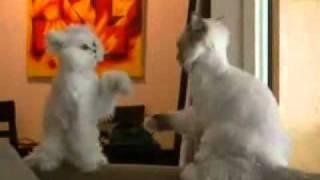 Кот борец и кот йога