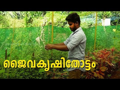 Mixed Cultivation Of Organic Crops| Hilal Muhammed