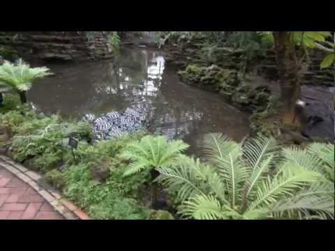 Garfield  Park Conservatory - A Brief Visit
