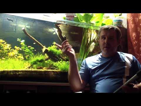 Температура воды в аквариуме и нитраты взаимосвязь
