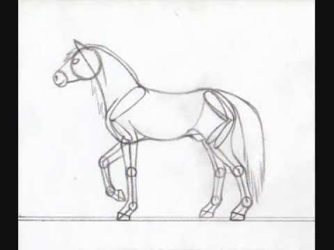 Horse anatomy drawing - YouTube