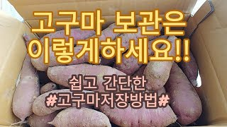 [고구마보관방법] 고구마 1년내내 저장해서 먹는방법
