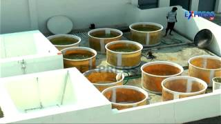Review of Shrimp Hatcheries in Andhra Pradesh and Quality seed production of Vannamei Shrimp