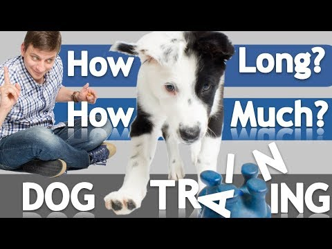 how-often-and-how-long-should-you-train-your-dog?