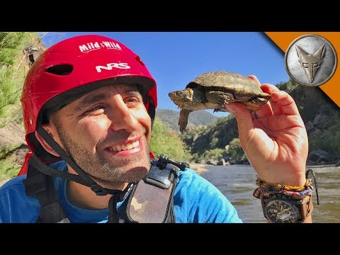 White Water Turtles!