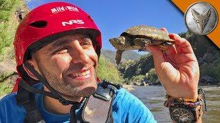 White Water Turtles! thumbnail