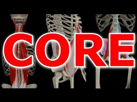 O Que é CORE e Quais Músculos Fazem Parte Dele? (Detonando em Cinesiologia)