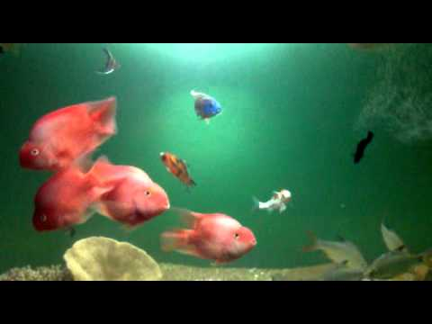 Download My Parrot fish.mp4