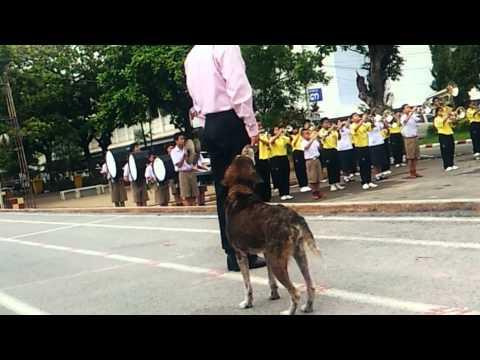 Singing Dog in Thailand