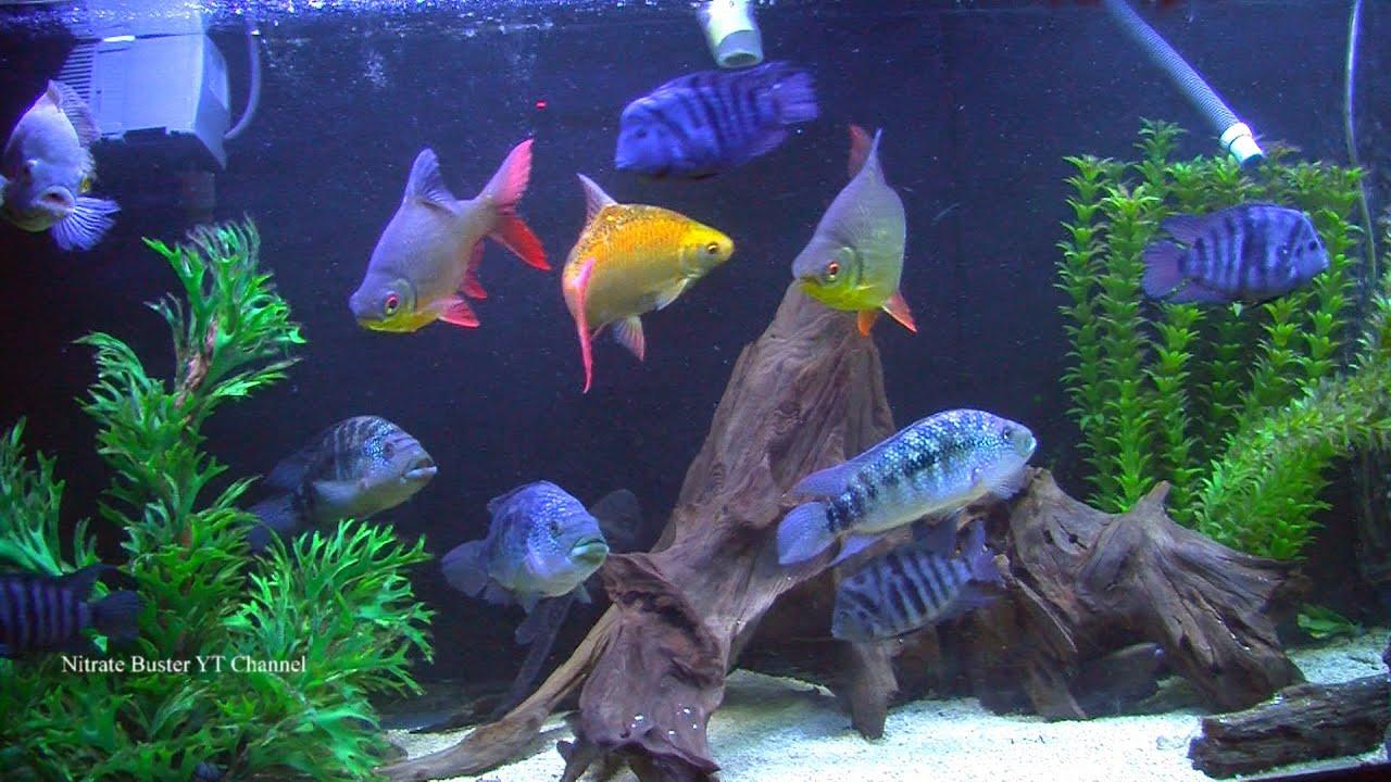 crystal fish aquarium - photo #46