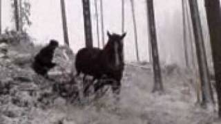 Přibližování dřeva koněm