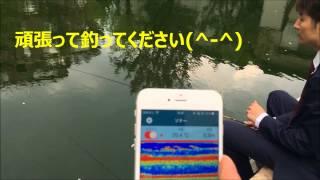 SONA.rBall ソナーボール 釣り堀 魚探 ヘラブナ