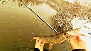 Рыбалка на щуку и снова жерлицы