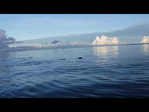 BOHOL: Panglao Dolphin Watching
