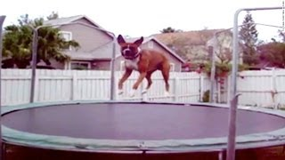 Dogs Who Love Trampolines
