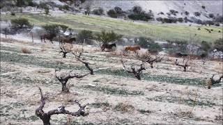 ビーニャ ファレルニア 野生の馬