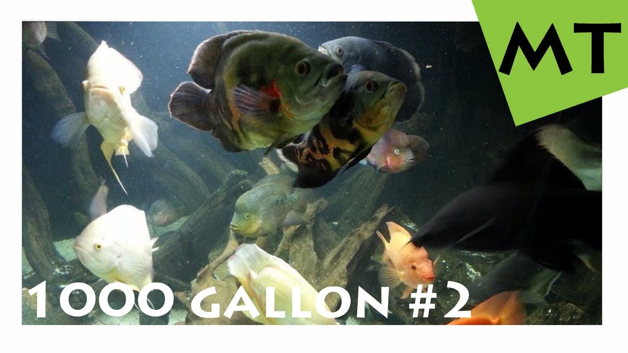 1000 gallon 4000 liter private monster fish tank 2 monster fish tank youtube. Black Bedroom Furniture Sets. Home Design Ideas