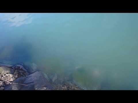 Pacific Herring Spawning Season - Fishing and Happy Sea Lions