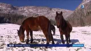 Connaissez-vous le cheval du Vercors de Barraquand ?