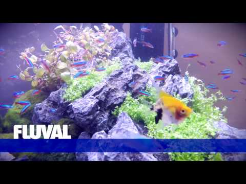 *NEW* Fluval Roma LED Aquariums (Euro Version)
