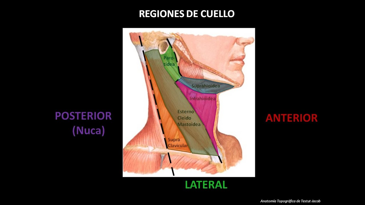 CUELLO (PARTE 1) - YouTube