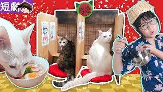 【短劇】貓籃拉麵店開張了![NyoNyoTV妞妞TV玩具]