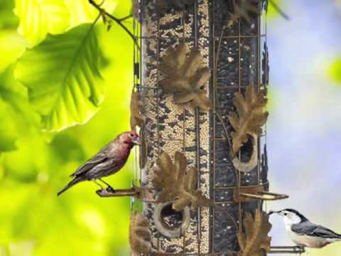 How To Attract Birds To Your Backyard how to attract birds to your backyard podcast - youtube