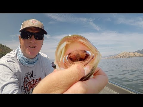 Easy Hook Removal For Gullet and Gut Hooked Fish