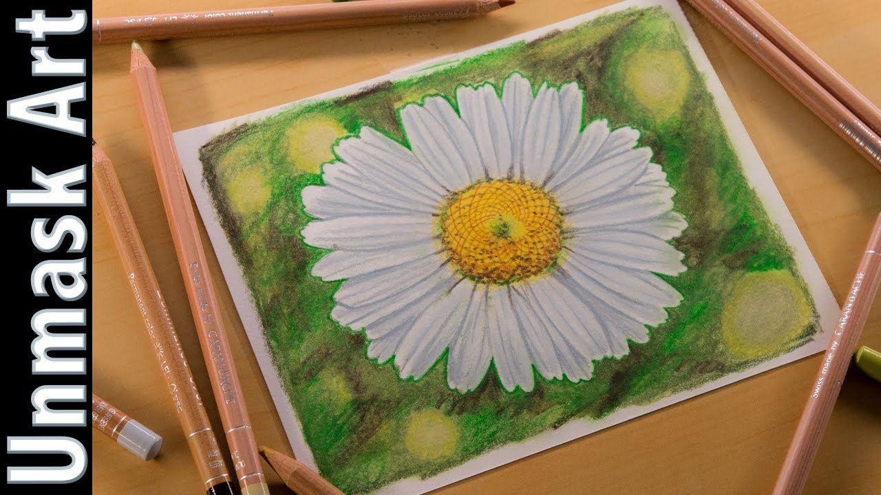 Daisy flower colored pencil drawing time lapse